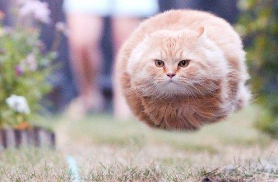 Cat hovering over land