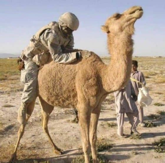 Soldiers on top of camel