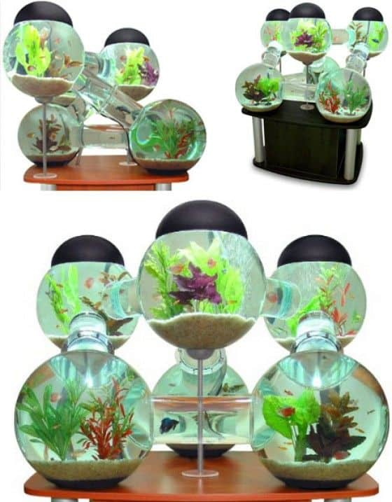 Coolest fish tanks and aquariums unfinished man for Labyrinth fish tank