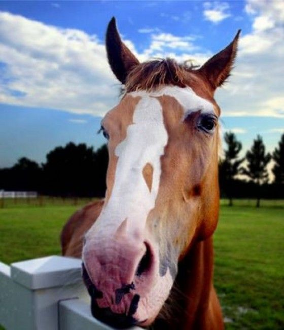 Illusion of lady hidden on a horse's nose