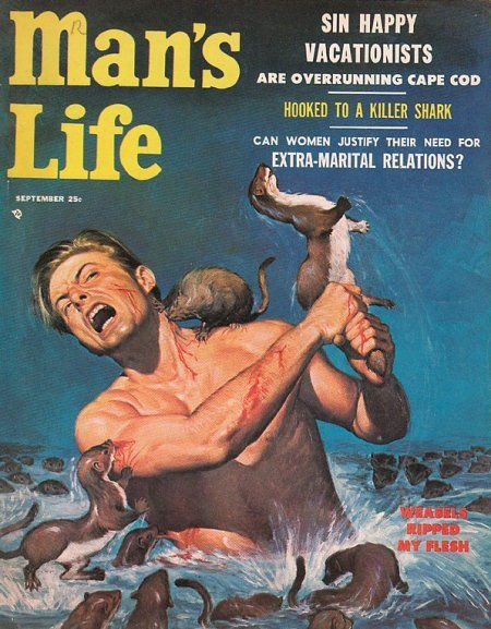 Man's Life man smashes weasel