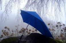 Senz XL Storm Umbrella Under A Tree In The Rain