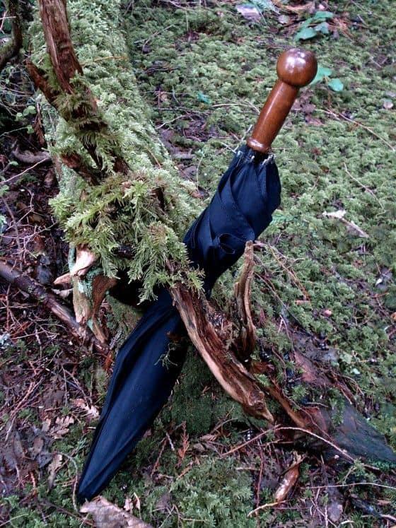 Unbreakable Umbrella In The Woods