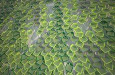 Solar Ivy Leaf uses sunlight