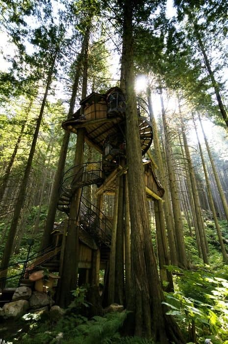Another Ewok styled treehouse