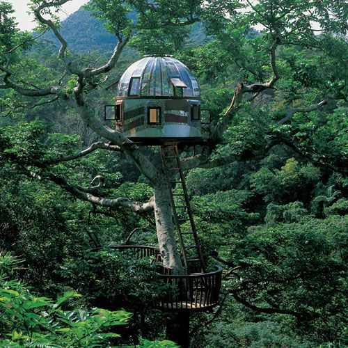 Glass Dome Treehouse