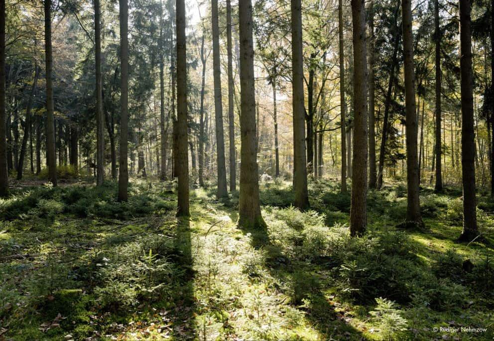 lightboys lightwall forest