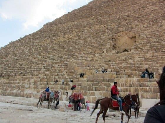 Horses near Pyramids
