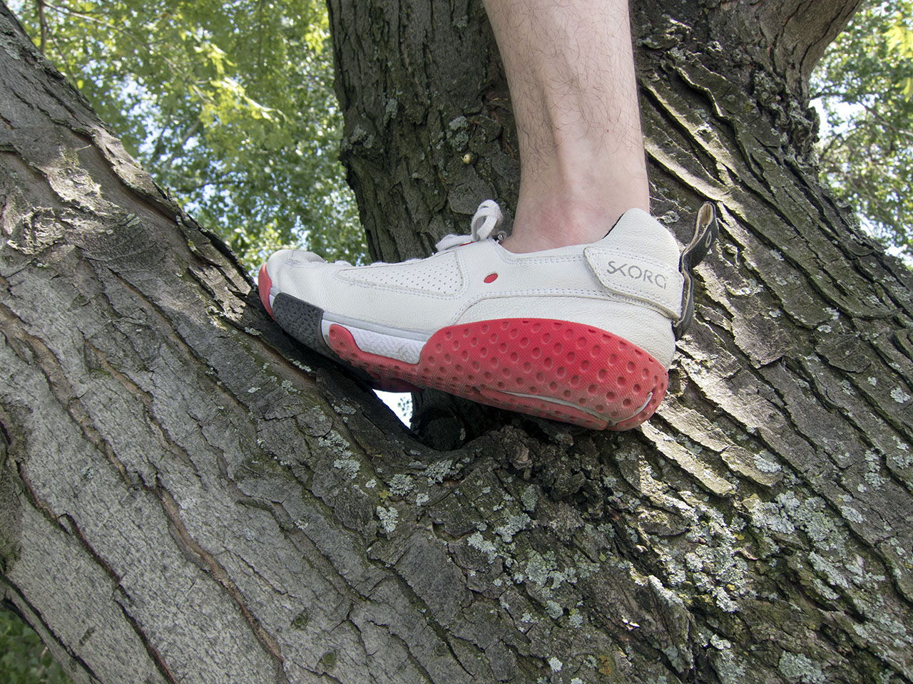 in a tree with barefoot shoe