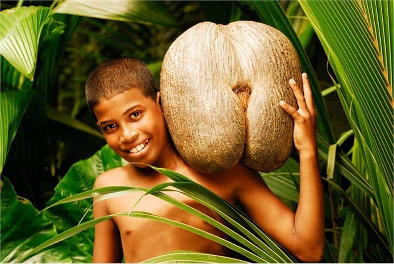seychelles vacation boy holding coco de mer nut