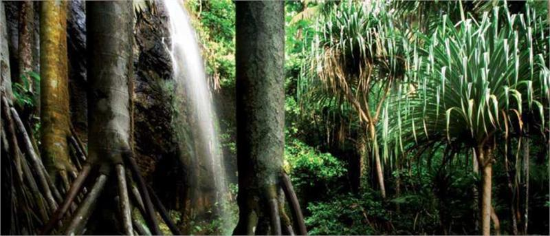 seychelles vacation vallee de mai