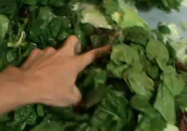 how to basic cooking smashing egg salad