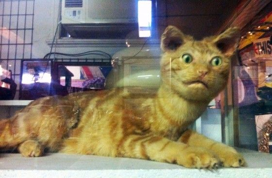taxidermy house cat