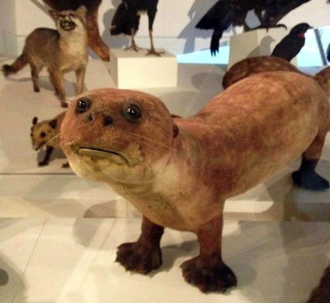 Terrible Taxidermy Animals The Fox Is Watching You Unfinished Man