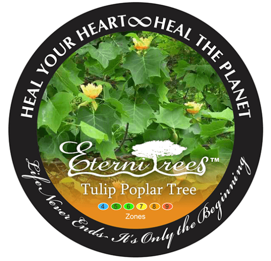 Eternitrees Plant