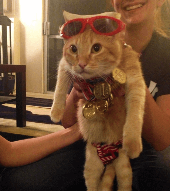 cat dressed as michael phelps