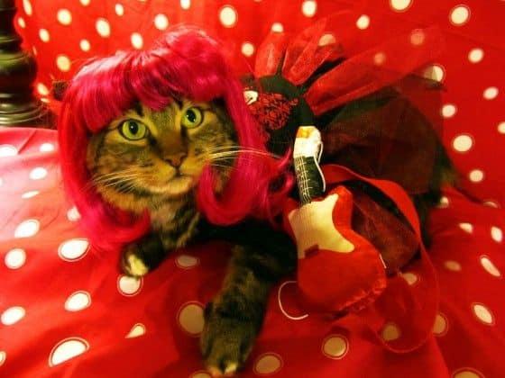 cat dressed as rockstar