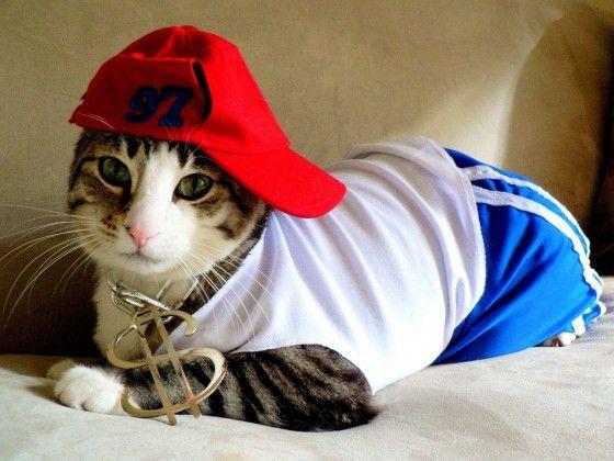 cat dressed as a rapper