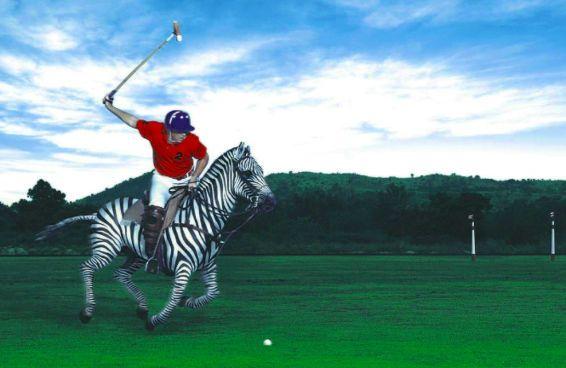 zebra-polo-painting