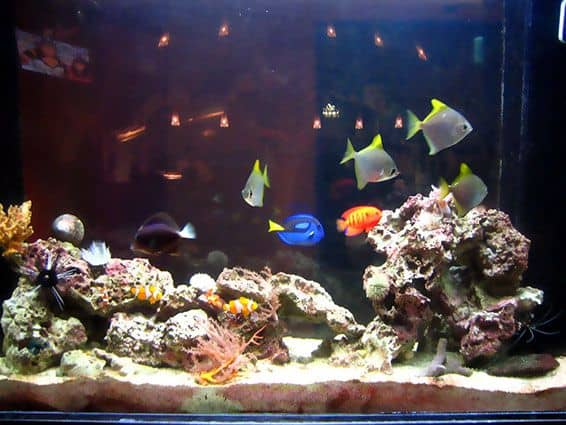 A pet everyone can keep on creating a home aquarium for Fish tank stinks