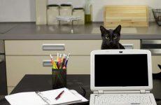 cat hiding behind computer screen