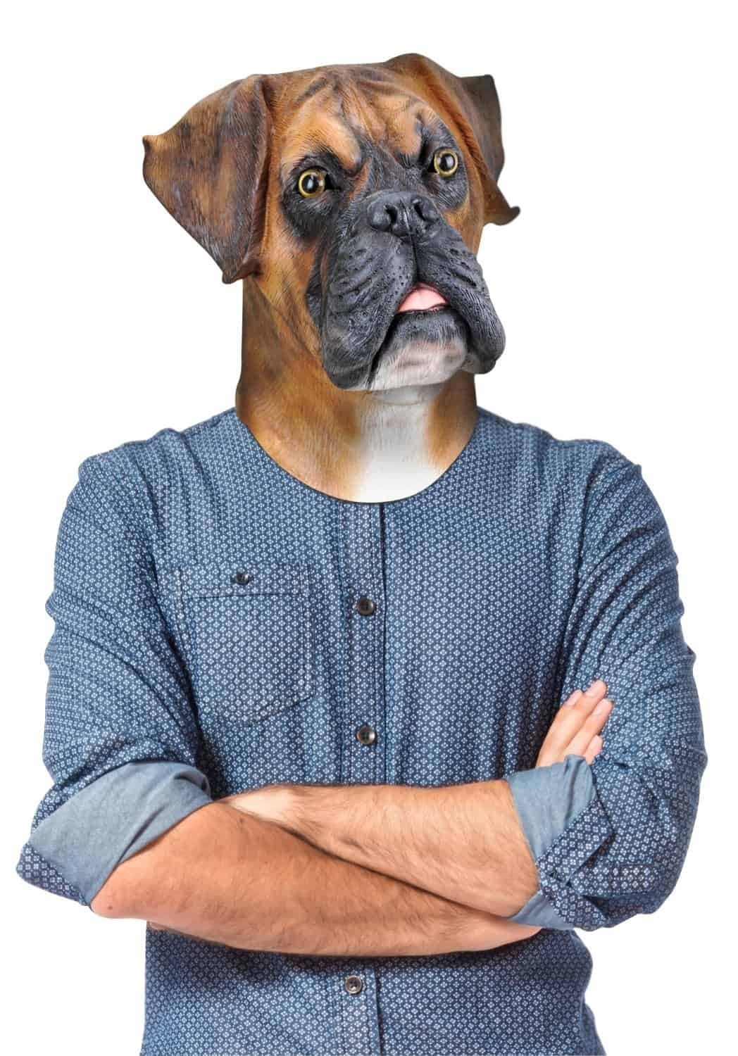 barry-the-boxer