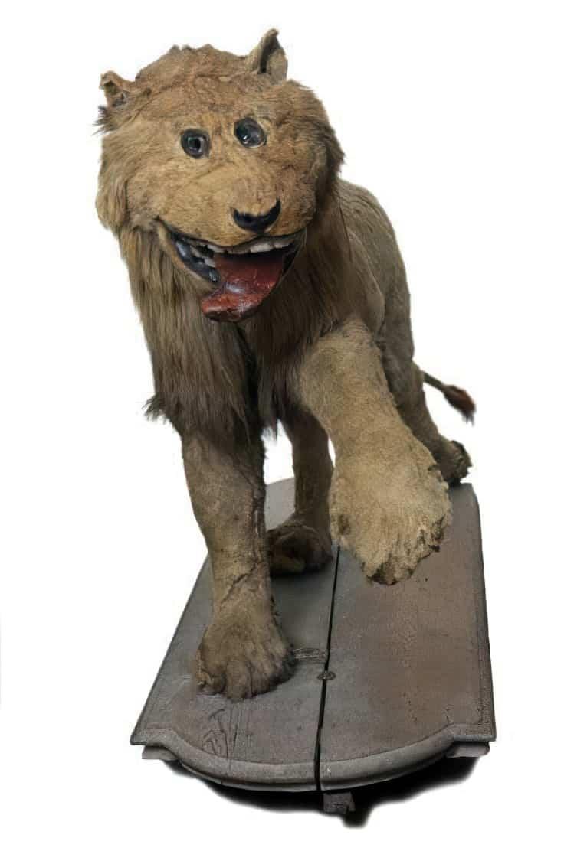 happy taxidermy lion