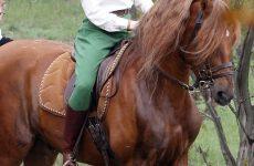 celebrities and horses photo