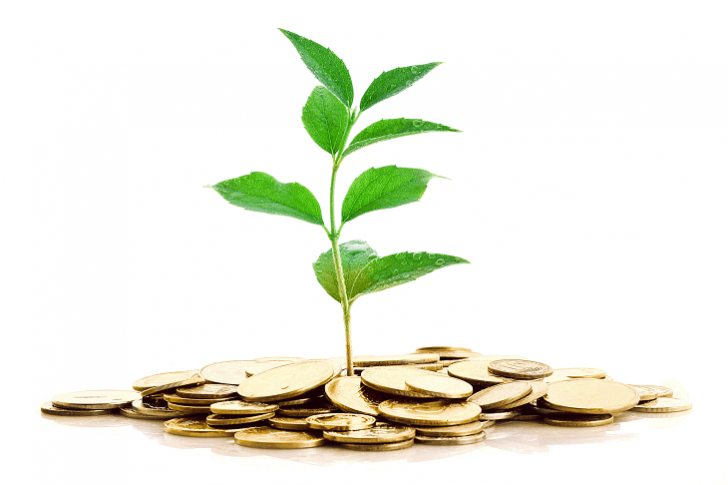 money plant investment