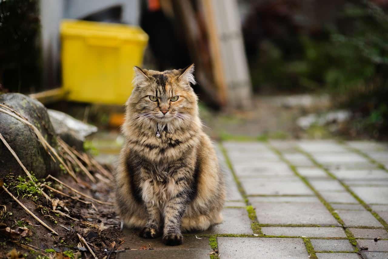 cat sitting portrait pet domestic