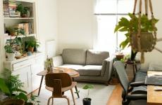 apartment plus houseplants
