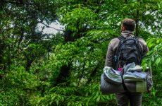 man looking at jungle