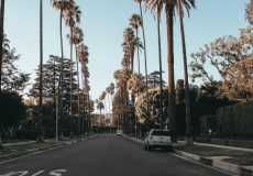 la streets palm trees