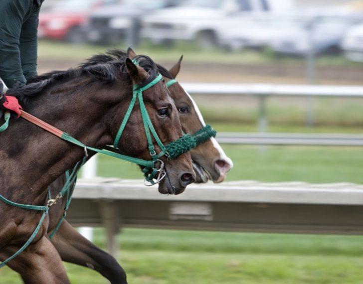 horse jockey horse racing