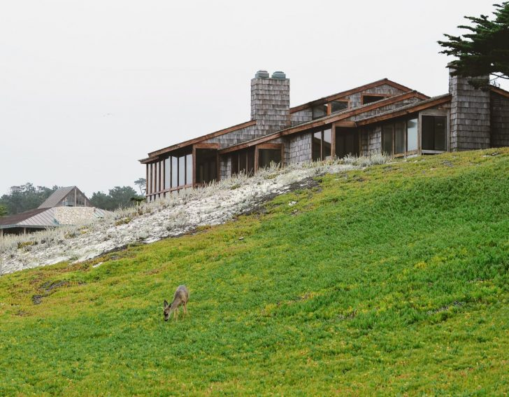 deer on lawn of ranch